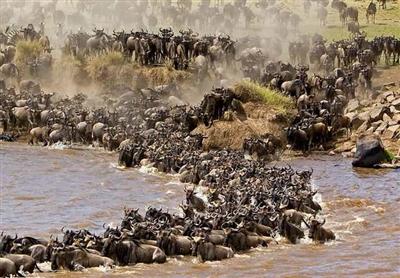 Wildebeest migration safari, 7 days. Kenya