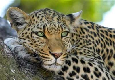Safari - all parks, 9 days. Kenya