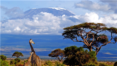 Kilimanjaro (5895 m) and Meru (4566 m). Climbing in Tanzania